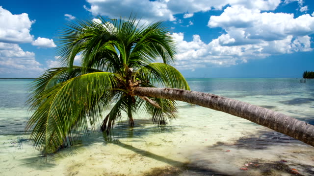 Palm Tree at Tropical Beach - Cuba video