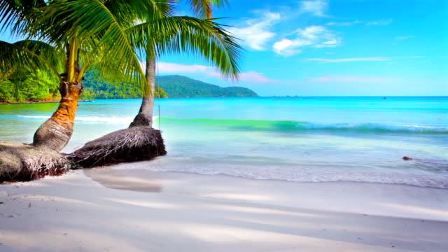 Palm tree beach. video