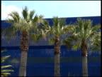 Palm Tree Blue: Three video