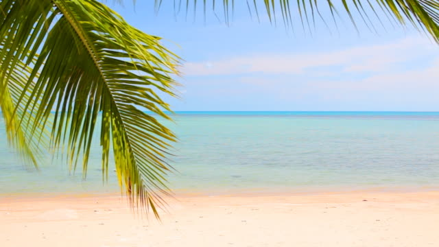 Palm tree branch over sea water video