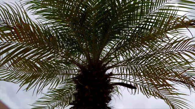 Palm Tree, Close Up video