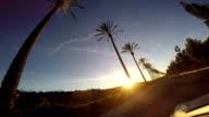 Palm Tree Drive video