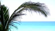 Palm tree foliage video