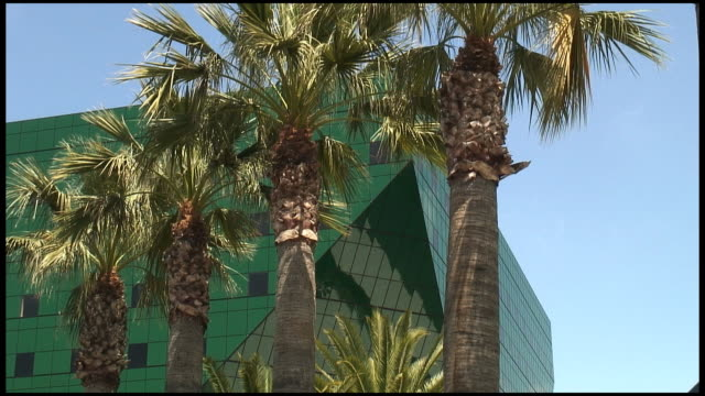 (HD1080i) Palm Tree Green: Four video