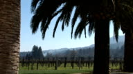 Palm tree in Napa Valley video