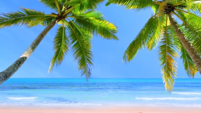 Palm tree in sunlight video