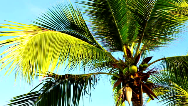 Palm tree in the sky. video