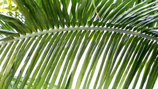 Palm tree leaf video