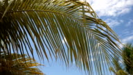 Palm tree leafs on sky background video