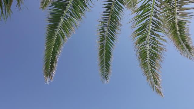 HD: Palm tree leaves video