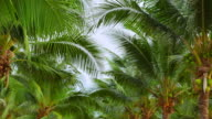 Palm tree leaves video