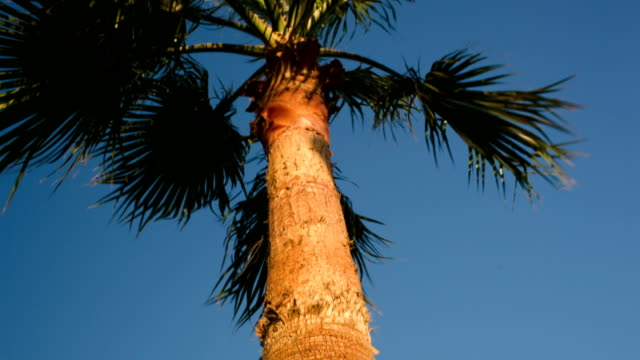 Palm tree on a windy day video