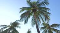 HD Palm tree on blue sky video