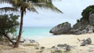 Palm tree on isolated tropical beach video