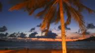 Palm tree on the beach twilight times video