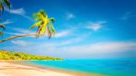 Palm tree on the beach video