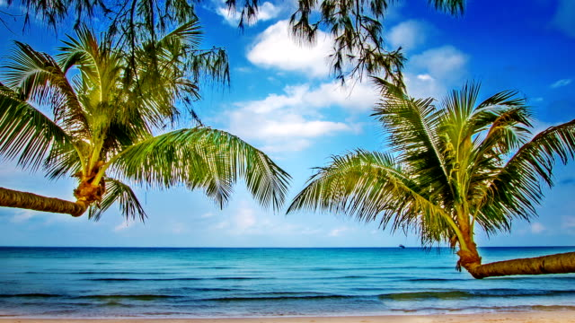 Palm tree on the beach. video