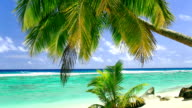 Palm tree on tropical beach of Rarotonga, Cook Islands video