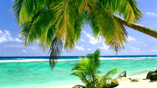 Palm tree on tropical beach of Rarotonga, Cook Islands video
