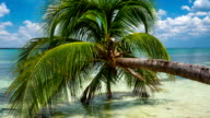 Palm Tree on Tropical Beach video