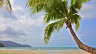 Palm tree over tropical beach video