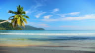 Palm tree, sea, sky video