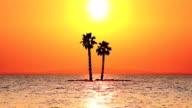 Palm tree, sunset, island, sea video
