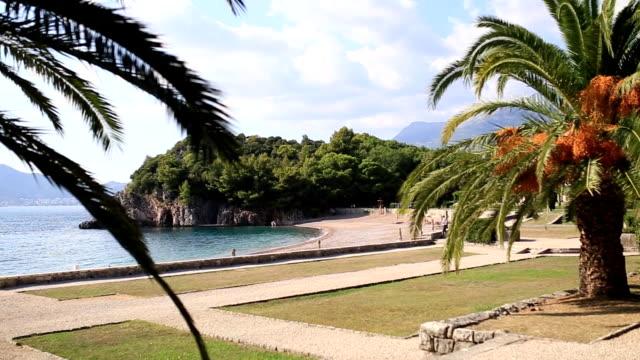 Palm tree top closeup on sea coast background video