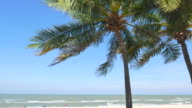 Palm tree video