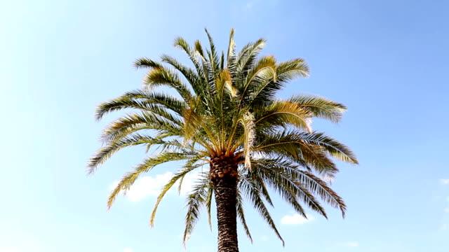 Palm tree (HD) video