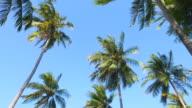 HD - Palm tree video