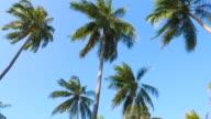 HD Palm tree video