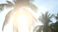 HD - Palm tree with sun flare video