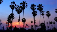Palm trees and sunset video