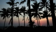 Palm trees at sunset. Goa India. video