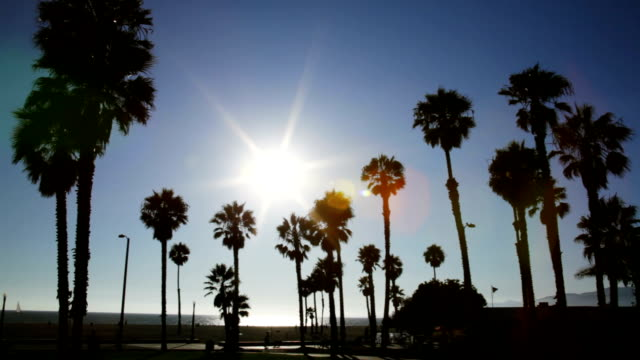 Palm Trees at Sunset video