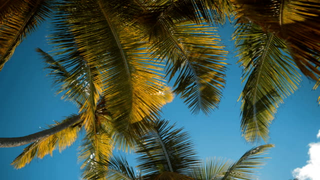 Palm trees at tropical coast video