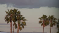 (HD1080i) Palm Trees Blow in the Wind as Storm Approaches video