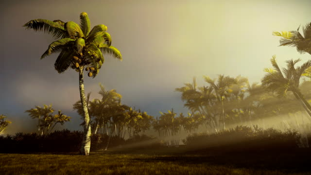 Palm trees blowing in the wind at sunrise video