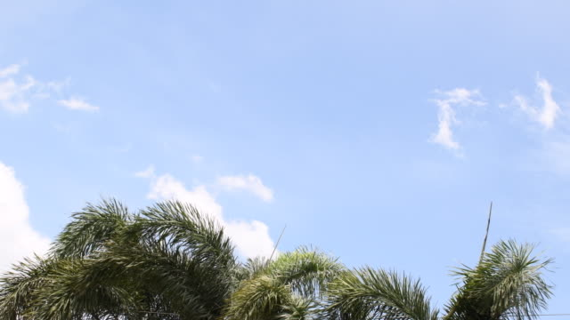 Palm trees branches moving on background sky video