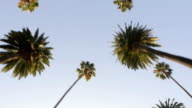 Palm Trees Cascade video
