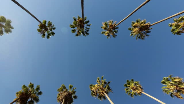 Palm Trees Drive Double Line video
