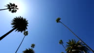 Palm trees in Beverly hills video