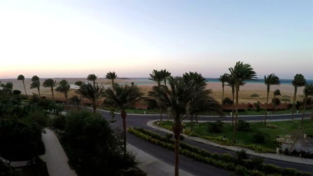 Palm Trees in Desert, Sunset. video