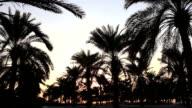 Palm Trees in Doha, Qatar video