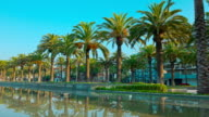 Palm trees in Salou, summer Spain video