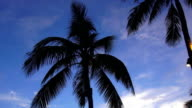 Palm trees in the evening sun video