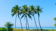 4K Palm Trees Isolated on Sand Beach, Blue Ocean Background video