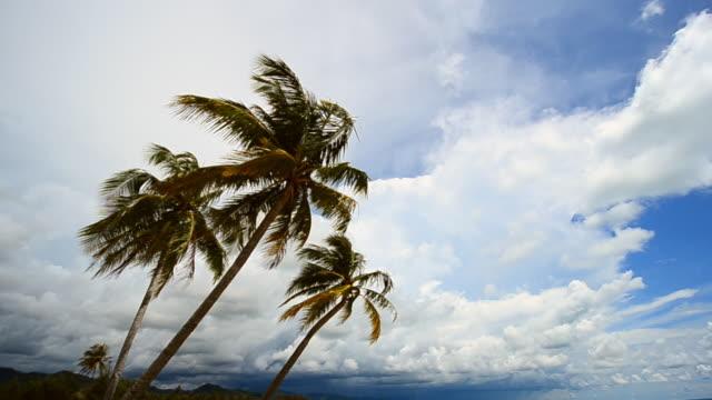 Palm trees near sea water on tropical beach video