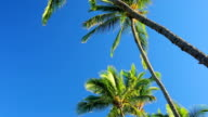 Palm Trees On a Beautiful Blue Sky Sunny Background in Paradise. video